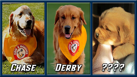 The new puppy is part of the third generation of Trenton Thunder golden retriever bat dogs.
