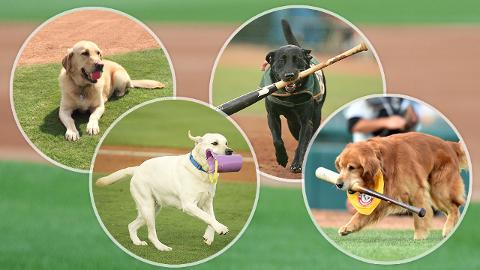 Minor League bat dogs: Brooks (Frisco), Deuce (Myrtle Beach), Miss Babe Ruth (Greensboro) and the late Derby (Trenton).