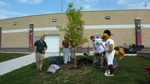 The first of nearly 60 trees donated by The Boldt Company in the broken bats program is planted outside Time Warner Cable Field at Fox Cities Stadium. Other trees will be planted at City of Appleton Public Parks.