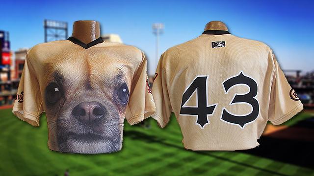 886c3964421d3 Chihuahuas  uniforms the buzz of baseball