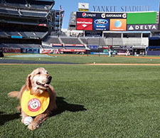 Chase at Yankee Stadium