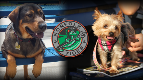Bark In The Park Norfolk Tides Tickets