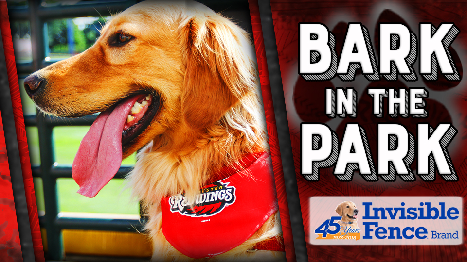 Bark in the Park at Frontier Field in 2018