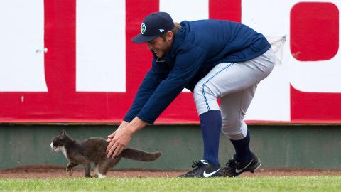 Members of the Hillsboro bullpen tried to corral an elusive cat.